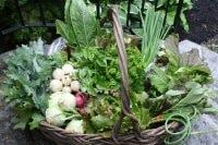 veggies-sm1