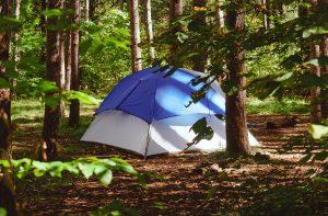 camping ellijay