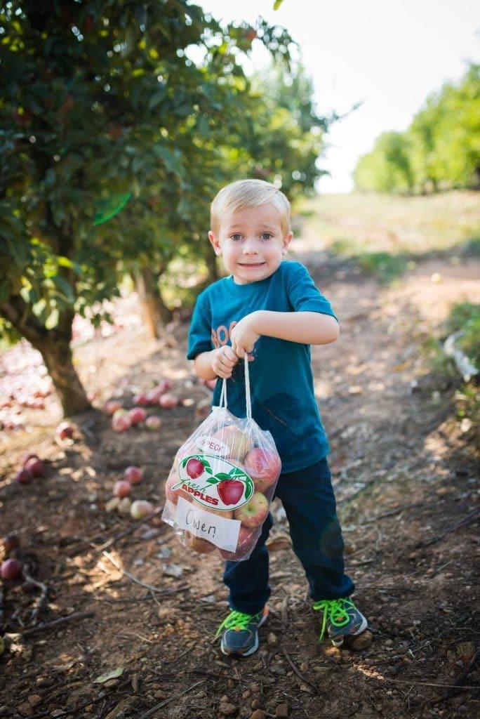 It's Apple Harvest Time